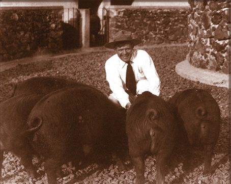Jack London with pigs.